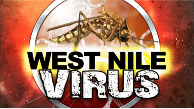Mosquitoes carrying West Nile virus found in IL