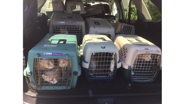 More cats rescued from hoarding environment